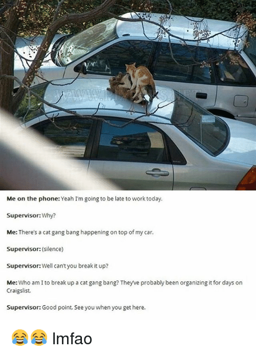 Cat Gang Bang: Me on the phone: Yeah I'm going to be late to work today  Supervisor: Why?  Me: There's a cat gang bang happening on top of my car  Supervisor: (silence)  Supervisor: Well cant you break it up?  Me: Who am I to break up a cat gang bang? Theyve probably been organizing it for days on  Craigslist.  Supervisor: Good point. See you when you get here. 😂😂 lmfao