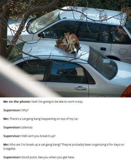 Cat Gang Bang: Me on the phone: Yeah I'm going to be late to work today.  Supervisor:Why?  Me: There's a cat gang bang happening on top of my car.  Supervisor: (silence)  Supervisor: Well can't you break it up?  Me: Who am I to break up a cat gang bang? Theyve probably been organizing it for days on  Craigslist.  Supervisor: Good point. See you when you get here.