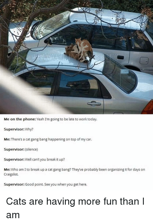 Cat Gang Bang: Me on the phone: Yeah I'm going to be late to work today  Supervisor:Why?  Me: There's a cat gang bang happening on top of my car.  Supervisor: (silence)  Supervisor: Well can't you break it up?  Me: Who am I to break up a cat gang bang? Theyve probably been organizing it for days on  Craigslist.  Supervisor: Good point. See you when you get here. Cats are having more fun than I am