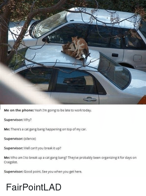Cat Gang Bang: Me on the phone:Yeah I'm going to be late to work today.  Supervisor: Why?  Me: There's a cat gang bang happening ontop of my car.  Supervisor: (silence)  Well cant you break it up?  Supervisor:  Me  Who am to break up a cat gang bang? Theyve probably been organizing itfor days on  Craigslist.  Supervisor: Good point. See you when you get here. FairPointLAD