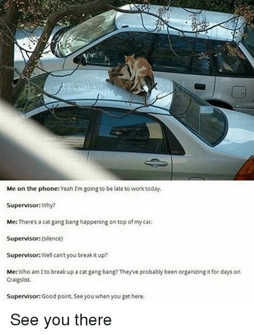 Cat Gang Bang: Me on the phone: Yeahim going to be late to work today.  Supervisor:  Why?  Me: There's a cat gang bang happening on top of my car.  Supervisor: (silence)  Supervisor: Well cantyou breakit up?  Me  Who am I to break up a cat gang bang? Theyve probably been organizing it for days on  Craigslist.  Supervisor: Good point. See you when you get here. See you there