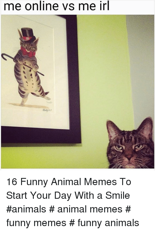 funny animal memes: me online vs me irl 16 Funny Animal Memes To Start Your Day With a Smile  #animals # animal memes # funny memes # funny animals