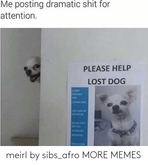 My House: Me posting dramatic shit for  attention.  PLEASE HELP  LOST DOG  AVERY  FRENDLY  AND  LOWNG DOG  LAST SEEN IN  MY HOUSE  PLEASE TEXT  OR CALL  123456765  M755-4321  DOGS KISSES meirl by sibs_afro MORE MEMES