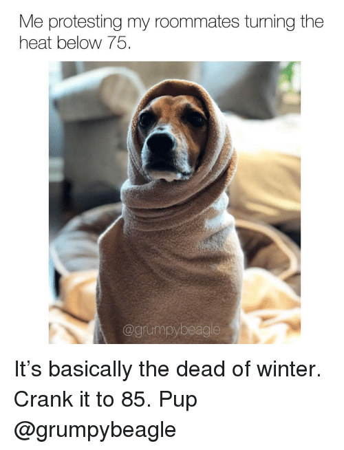 Protesting: Me protesting my roommates turning the  heat below 75  @grumpybeagle It's basically the dead of winter. Crank it to 85. Pup @grumpybeagle