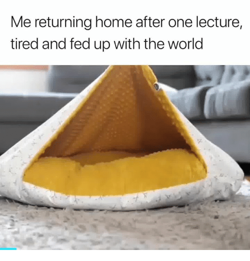 fed up: Me returning home after one lecture,  tired and fed up with the world