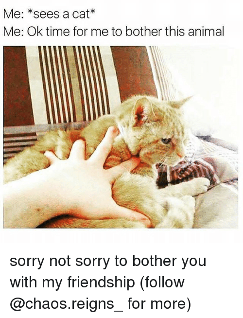 Memes, Sorry, and Animal: Me: *sees a cat*  Me: Ok time for me to bother this animal sorry not sorry to bother you with my friendship (follow @chaos.reigns_ for more)