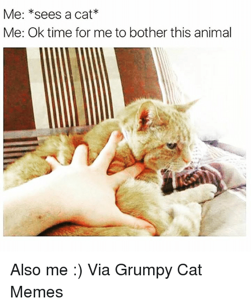 Cats, Memes, and Grumpy Cat: Me: *sees a cat  Me: Ok time for me to bother this animal Also me :) Via Grumpy Cat Memes