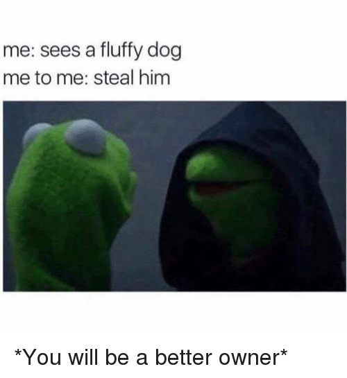 Memes, 🤖, and Dog: me: sees a fluffy dog  me to me: steal him *You will be a better owner*