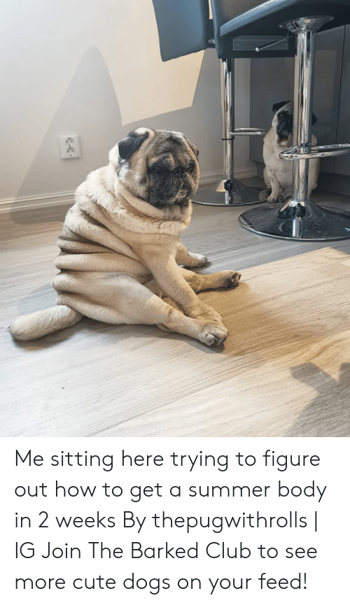 Sitting Here: Me sitting here trying to figure out how to get a summer body in 2 weeks By thepugwithrolls | IG  Join The Barked Club to see more cute dogs on your feed!
