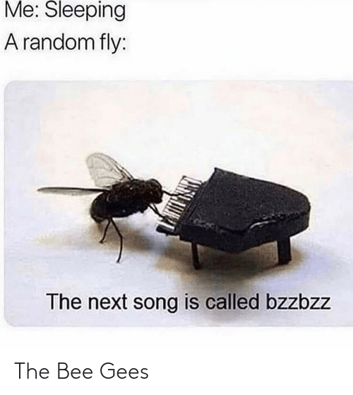 bee gees: Me: Sleeping  A random fly:  The next song is called bzzbzz The Bee Gees