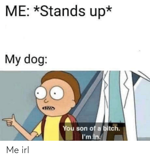 Stands: ME: *Stands up*  My dog:  You son of a bitch.  I'm in. Me irl