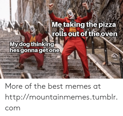 oven: Me taking the pizza)  rolls out of the oven  Mydog thinking  hes gonna getone More of the best memes at http://mountainmemes.tumblr.com