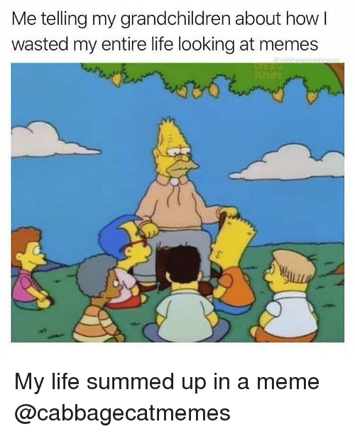 Summed Up: Me telling my grandchildren about how  wasted my entire life looking at memes My life summed up in a meme @cabbagecatmemes