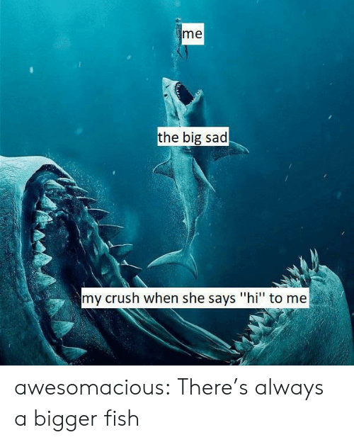"""My Crush: me  the big sad  my crush when she says """"hi"""" to me awesomacious:  There's always a bigger fish"""