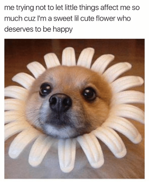 Cute, Affect, and Flower: me trying not to let little things affect me so  much cuz I'm a sweet lil cute flower who  deserves to be happy