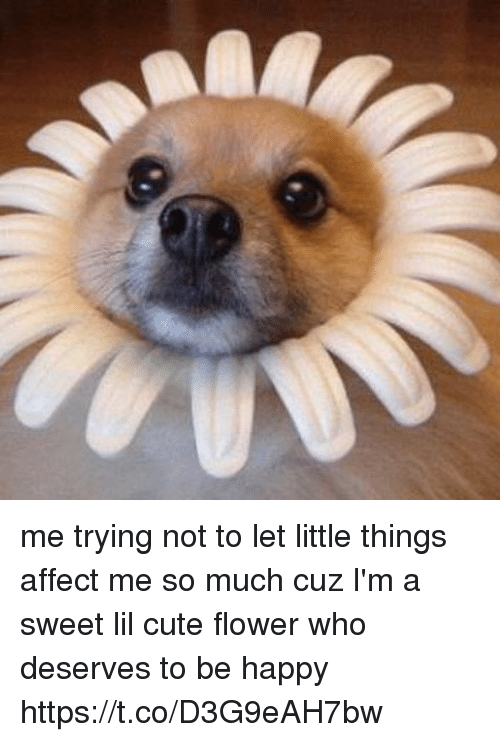 Cute, Affect, and Flower: me trying not to let little things affect me so much cuz I'm a sweet lil cute flower who deserves to be happy https://t.co/D3G9eAH7bw
