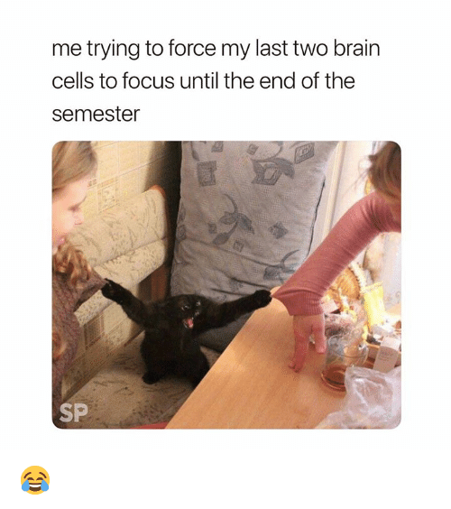 Brain, Focus, and Force: me trying to force my last two brain  cells to focus until the end of the  semester  SP 😂