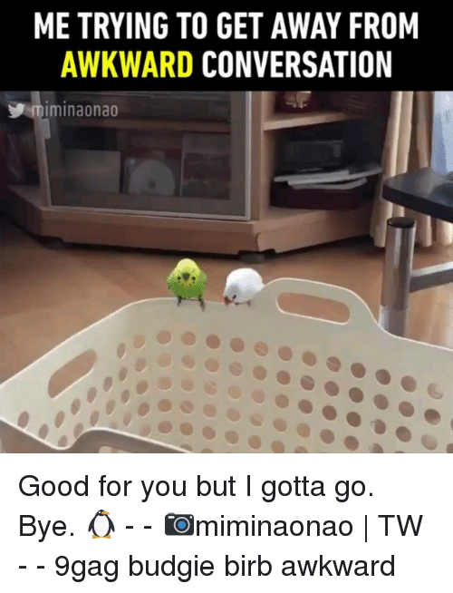 9gag, Good for You, and Memes: ME TRYING TO GET AWAY FROM  AWKWARD CONVERSATION  miminaonao Good for you but I gotta go. Bye. 🐧 - - 📷miminaonao | TW - - 9gag budgie birb awkward