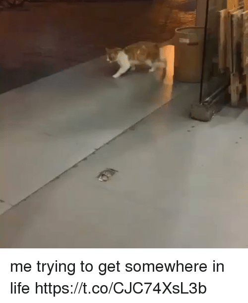 Life, Girl Memes, and Somewhere: me trying to get somewhere in life https://t.co/CJC74XsL3b