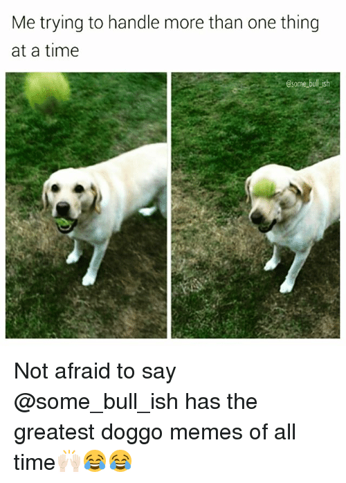 Funny, Memes, and Time: Me trying to handle more than one thing  at a time  @some bull ish Not afraid to say @some_bull_ish has the greatest doggo memes of all time🙌🏻😂😂