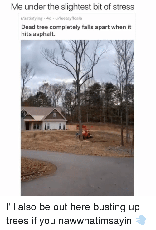 asphalt: Me under the slightest bit of stress  r/satisfying 4d u/leetayfloala  Dead tree completely falls apart when it  hits asphalt. I'll also be out here busting up trees if you nawwhatimsayin 💨