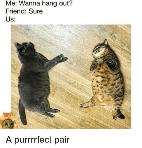 Memes, 🤖, and Friend: Me: Wanna hang out?  Friend: Sure  Us: A purrrrfect pair