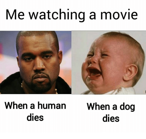 Movie, Dog, and Human: Me watching a movie  When a human  When a dog  dies  dies