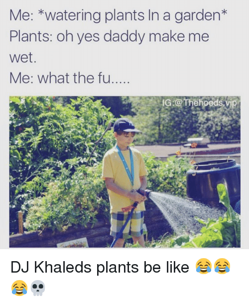 Be Like, DJ Khaled, and Funny: Me: watering plants In a garden  Plants: oh yes daddy make me  Wet  Me: what the fu  IG @The hoods v DJ Khaleds plants be like 😂😂😂💀