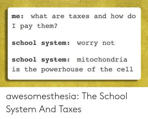 Mitochondria: me: what are taxes and how do  I pay them?  school system:  worry not  mitochondria  school system:  is the powerhouse of the cell awesomesthesia:  The School System And Taxes