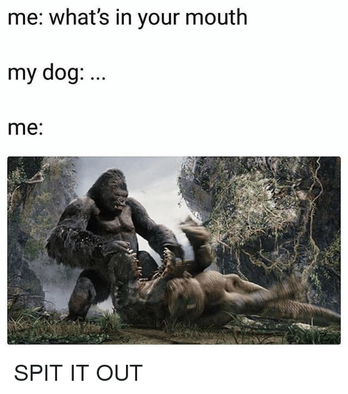 Memes, 🤖, and Dog: me: what's in your mouth  my dog:  me: SPIT IT OUT