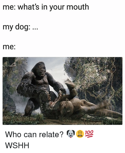 Memes, Wshh, and 🤖: me: what's in your mouth  my dog: ..  me: Who can relate? 🐶😩💯 WSHH