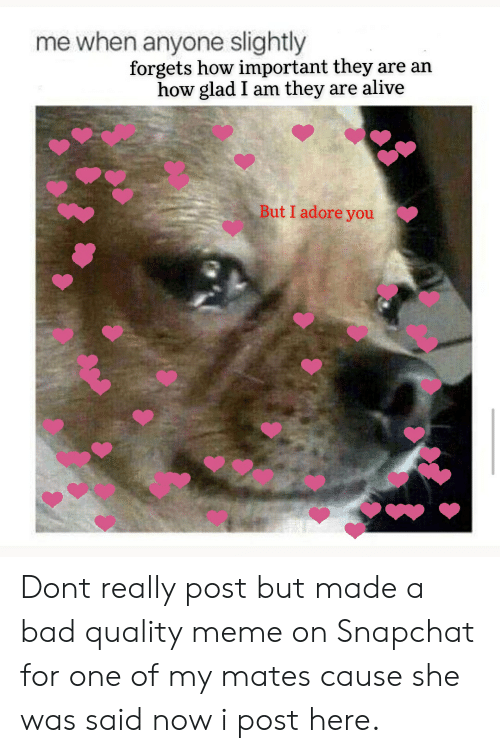 adore you: me when anyone slightly  forgets how important they are an  how glad I am they are alive  But I adore you Dont really post but made a bad quality meme on Snapchat for one of my mates cause she was said now i post here.