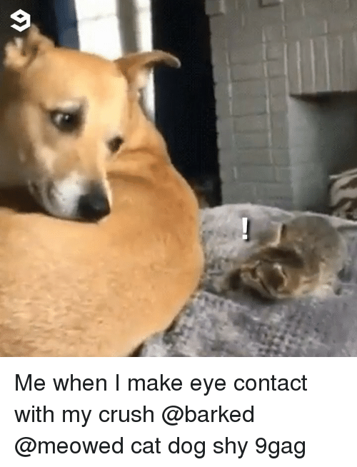 cat dog: Me when I make eye contact with my crush @barked @meowed cat dog shy 9gag