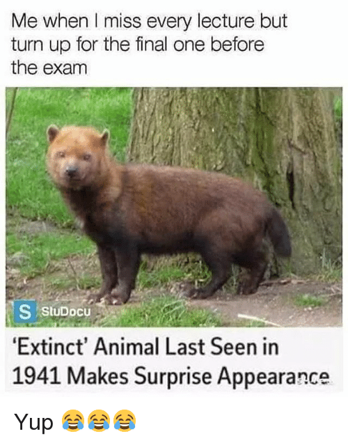 Funny, Turn Up, and Animal: Me when I miss every lecture but  turn up for the final one before  the exam  S Stupocu  Extinct' Animal Last Seen in  1941 Makes Surprise Appearance Yup 😂😂😂