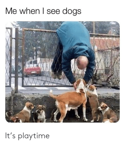 Me When I: Me when I see dogs It's playtime