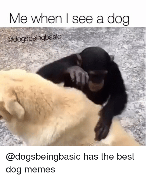 Funny, Memes, and Best: Me when see a dog  @dogsbeing basic @dogsbeingbasic has the best dog memes