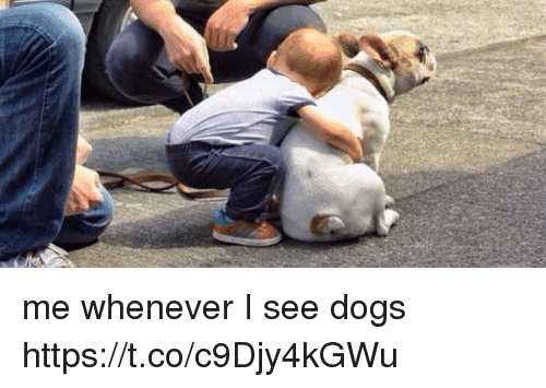 Dogs, Girl Memes, and Whenever: me whenever I see dogs https://t.co/c9Djy4kGWu