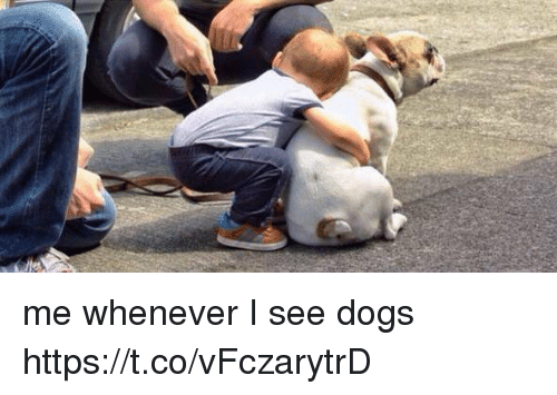 Dogs, Girl Memes, and Whenever: me whenever I see dogs https://t.co/vFczarytrD