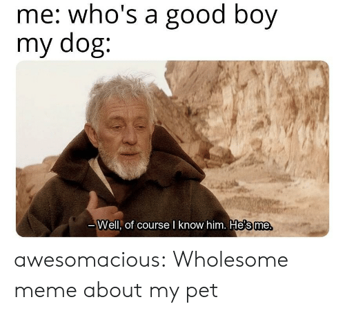 Wholesome Meme: me: who's a good boy  my dog:  те.  Well, of course l know him. He's me awesomacious:  Wholesome meme about my pet