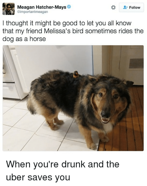 Drunk, Funny, and Uber: Meagan Hatcher-Mays  Follow  @importantmeagan  l thought it might be good to let you all know  that my friend Melissa's bird sometimes rides the  dog as a horse When you're drunk and the uber saves you