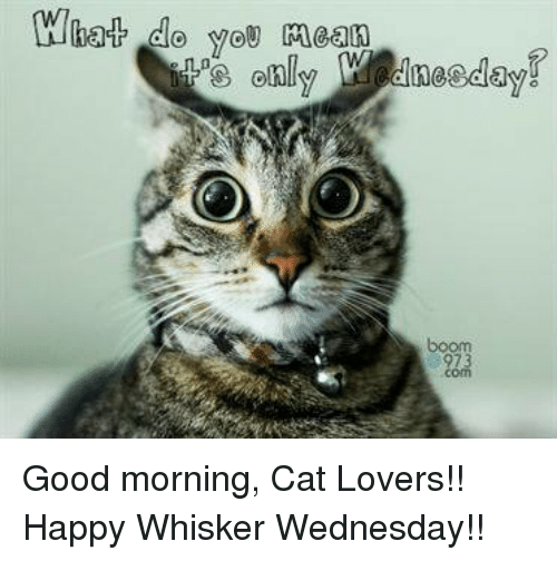 Image result for wednesday cat images