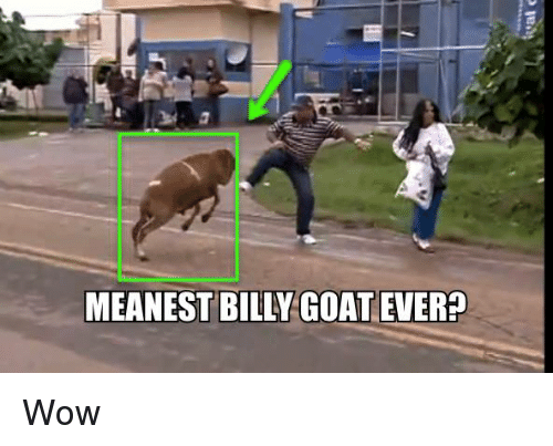 meanest billy goat ever wow 4536943 meanest billy goat ever? wow meme on sizzle,Billy Goat Meme