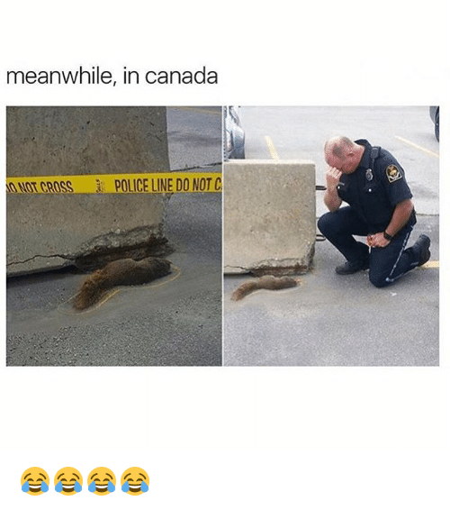 meanwhile in canada: meanwhile, in canada  ONOT CROSS  POLICE LINE DO NOT C 😂😂😂😂