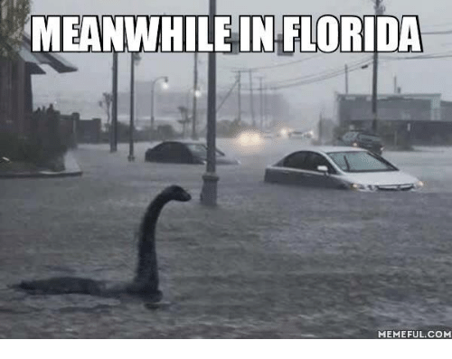 meanwhile in florida memeful com 4620424 meanwhile in florida memeful com meme on sizzle