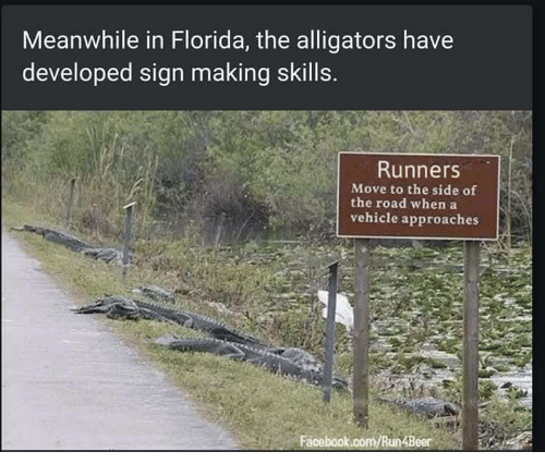 meanwhile in florida the alligators have developed sign making skills 17505050 meanwhile in florida the alligators have developed sign making