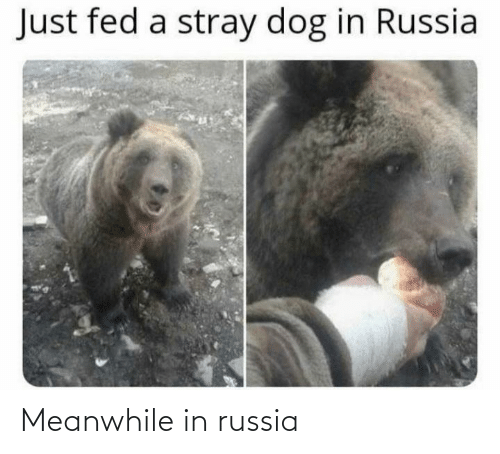 meanwhile: Meanwhile in russia