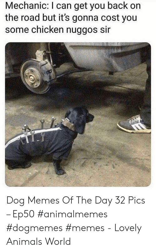 mechanic: Mechanic: I can get you back on  the road but it's gonna cost you  some chicken nuggos sir Dog Memes Of The Day 32 Pics – Ep50 #animalmemes #dogmemes #memes - Lovely Animals World