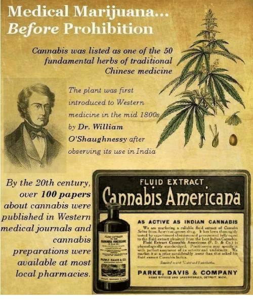 Cannabis: Medical Marijuana  Before Prohibition  Cannabis was listed as one of the 50  fundamental herbs of traditional  Chinese medicine  The plant was first  introduced to Western  medicine in the mid 1800s  by Dr. William  O'Shaughnessy after  observing its use in India  By the 20th century  FLUID EXTRACT  Cannabis Americana  over 100 papers  about cannabis were  published in Western  AS ACTIVE AS INDIAN CANNABIS  medical journals and  We are marketi  ng a reliable fluid extract of Camelu  cannabis  to the fluid  extract obtain d from the best Indian  Flaic Entract Cann bis At  phyxologically.andardized. Practitrur era may sperafy is  preparations were  .market it at a price considerably ower than that asked for  available at most  local pharmacies  PARKE, DAVIS & COMPANY