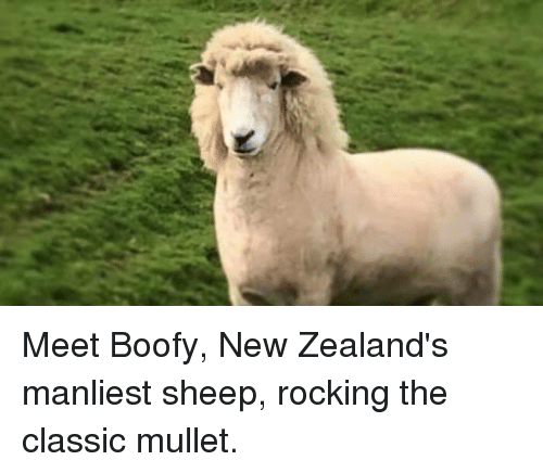 Sheep, New, and Classic