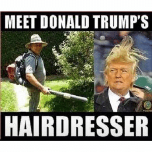 Donald Trump, Trump, and Dank Memes: MEET DONALD TRUMP'S  HAIRDRESSER